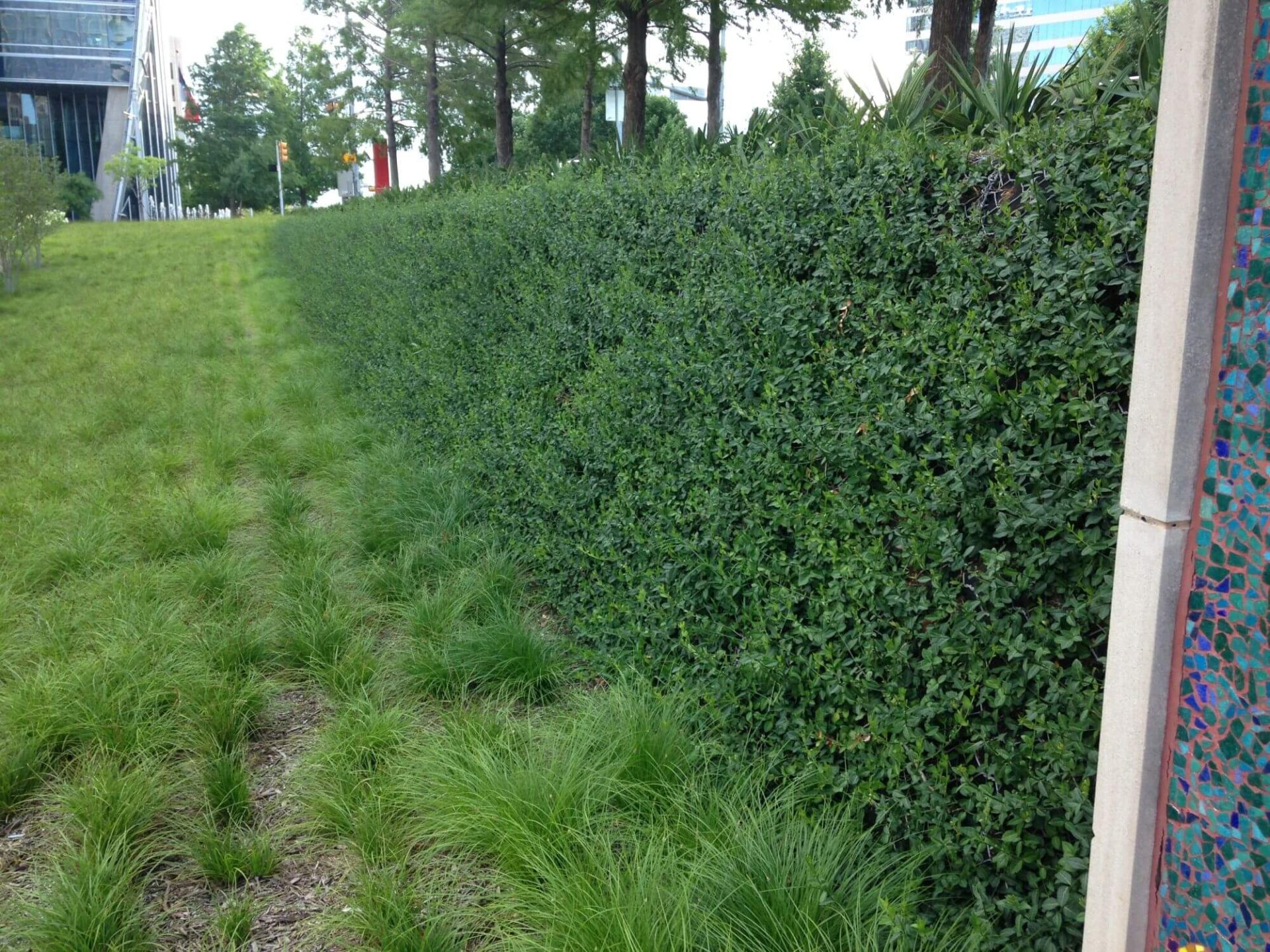 Green vegetated wall